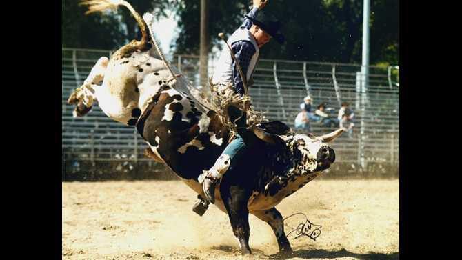 Bull-Rodeo