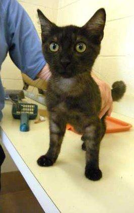 POTW-black-cat-standing-DSC