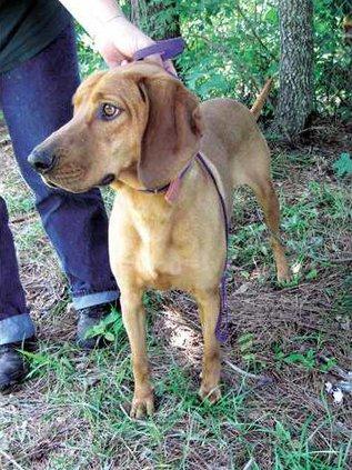 POTW-red-bone-hound-IMG 52