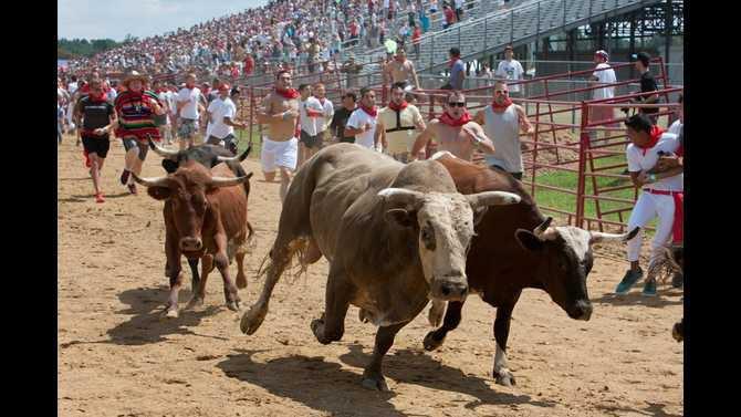 Great-Bull-Run51