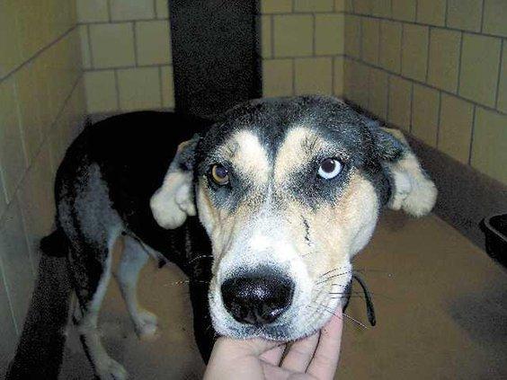 POTW---dog-with-eye-HPIM159