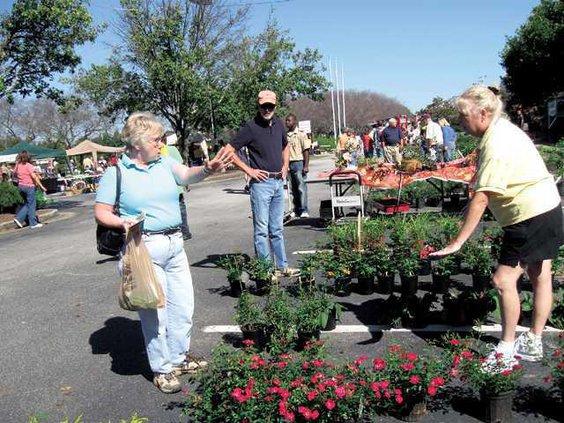 plant-sale---body-language-