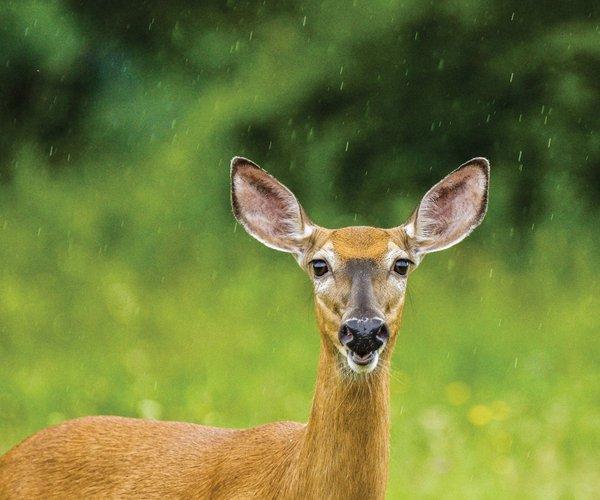 1029AG-Deer-Caution.jpg